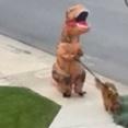 見た目も強いし感染もしない。Tレックスの着ぐるみを着て愛犬の散歩に挑む人が発見された
