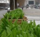 これが中国式「緑化」?プラスチック製の野菜で大通りを埋め尽くす―中国
