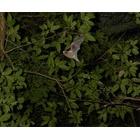 『静かに飛ぶ』の画像