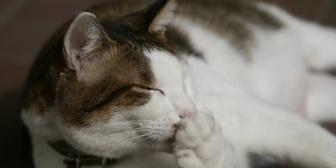 【衝撃】飼い猫が子猫を産んだ。→まだ目も開いてない子猫の子育てを少し離れて見てたらまさかの行動に…