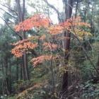 『2018/11/13(火) 天気微妙のため高尾山界隈へ』の画像