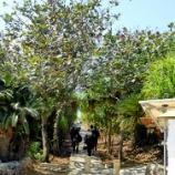 『宮古島旅行2017春:通り池へ』の画像