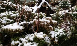 マビでは降らなかった雪、現実では少し積もる