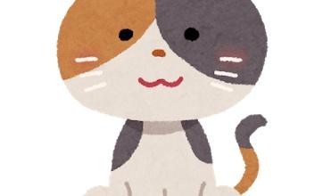絞った○○を嗅いだ時の猫wwwwwwwwwwwwwwwwwww