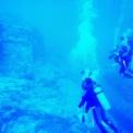 ムー☆与那国島にて(1)〜『ムー』海底遺跡ダイビング1日目を終えて〜