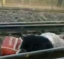【動画】誤って線路に入った女性、線路の上に腹ばいになり間一髪で列車を回避
