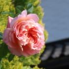 『5月の庭仕事【草花の整理・害虫退治】』の画像