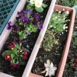 『春、もってきました』の画像