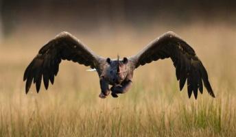 【画像】動物たちの奇妙なハイブリットがスゴ過ぎワロタwwwwwww