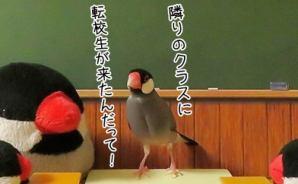 「小鳥の学校」に来た転校生