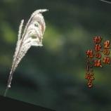 『風そよぎ』の画像