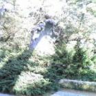『出雲大社 神在祭』の画像