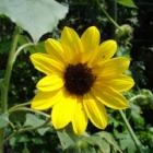 『初めて種まきする方に私がおすすめする育てやすい春蒔き1年草』の画像