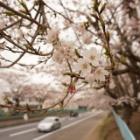 『Sony α6000で撮る【茨城県の桜写真】 2015年4月』の画像