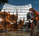 鏡1000枚であぶり焼き鳥、タイ屋台のソーラークッキングが話題