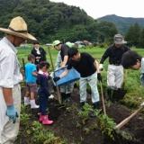 ジャガイモ掘りで、黒坂小学校と交流!