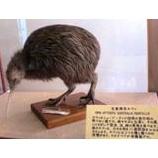 『国鳥を教案にしてみる』の画像
