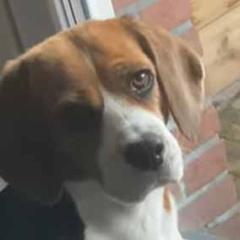 うちの犬がドアの前にやってきた。ほら、散歩に行く時間だよ → 犬は黙ってこうします…