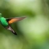 『ハチドリ:ハミングバード・ウィスパラー』の画像