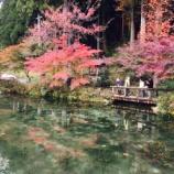 『秋の「モネの池」(岐阜県関市)へマイカーで行く人は必見!これは都会では味わえないですね。』の画像