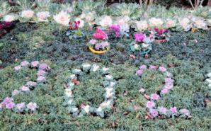 """""""植物園勤務""""のときに作った花壇を公開"""