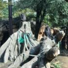 『そういえば、動物園行ってました。2』の画像