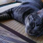 保護猫ジャックの徒然日記
