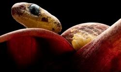 カタツムリを「吸う」新種ヘビ5種を発見、南米