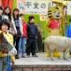 宇都宮動物園-干支の引継式