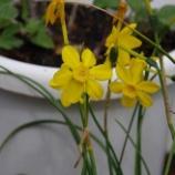『4月の都立薬用植物園②』の画像