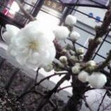 『春三番。』の画像