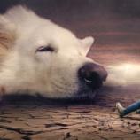 『犬と猫の胸水についての基礎知識』の画像