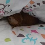 『巣ごもりムギ/2度寝からの寝すぎムギ=^_^=』の画像