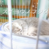 『【免疫力】水曜の藤田』の画像
