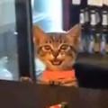ネコ好きは仕事終わりにどこ行くの? いらっしゃ~い♪ → 秘密の猫バーはこちらです…