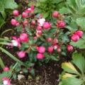 初夏の庭 Part2