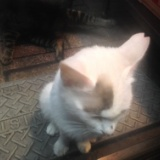 速報!十条仲通商店街「地域猫誕生!」の写真