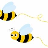『蜂がとんでもない場所へ巣をつくった』の画像