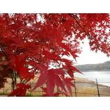 『紅葉を歩く』の画像