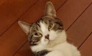 猫の必殺技「おびきよせ~」