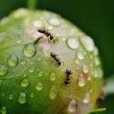 【画像あり】テレビの液晶にアリの巣できててワロタwwwwwwwwww
