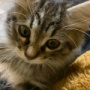 スミちゃんと成長してきた子猫たちの写真