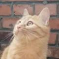ネコが警戒しながら上を見ていた。今は危ないから出ちゃダメ! → 猫はヒヨコのお母さんになったようです…