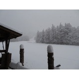 『雪の朝です。本日、新雪楽しめます!』の画像
