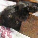 『シウリザクラのローテーブル』の画像