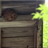 『我が家の蜂の巣』の画像