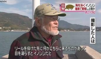 イノシシの大群が海を泳いで四国に上陸中