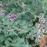 『毛越寺「萩まつり」 岩手県平泉町』の画像