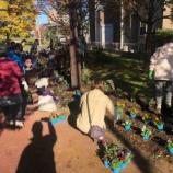 『鍛冶谷町会(戸田市上戸田・本町)で、秋の花の植え替えをやりました。五差路の王将左横からから蕨に向かう道を進んで右手すぐの場所にあるかじや花壇をお楽しみください。』の画像