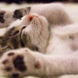 『睡眠はダンスも仕事もプライベートにも。『睡眠こそ最強の解決策である』』の画像